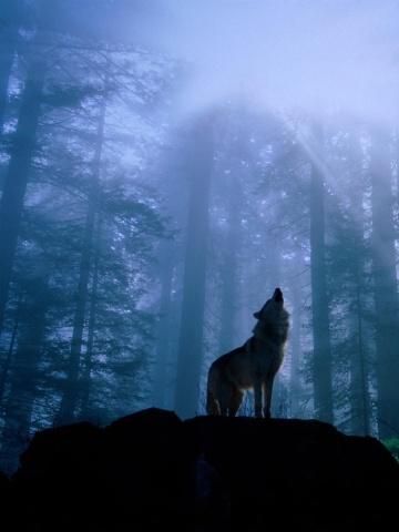 красивые картинки на телефон волки